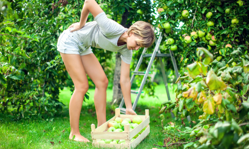 Woman experiencing back pain in the while harvesting fruit