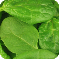 image of spinach.